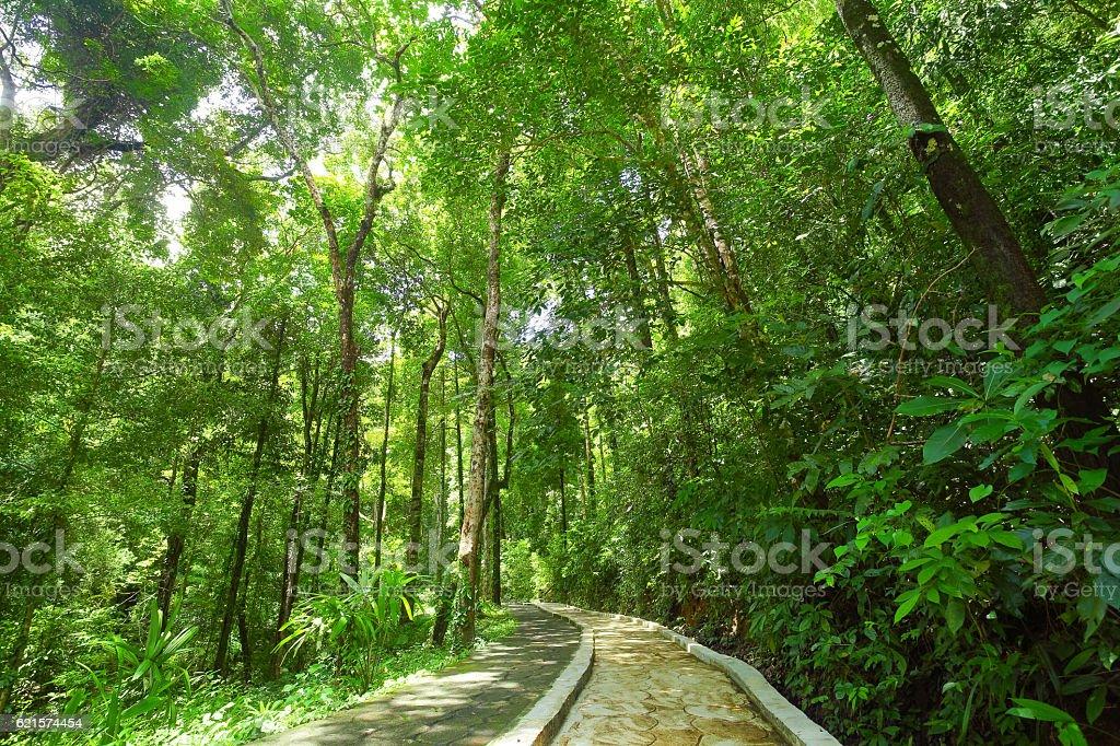 Un sentier Nature  photo libre de droits