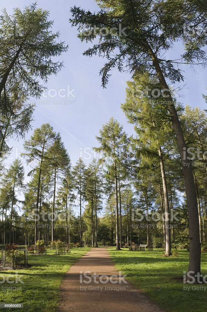 Nature trail royalty free stockfoto