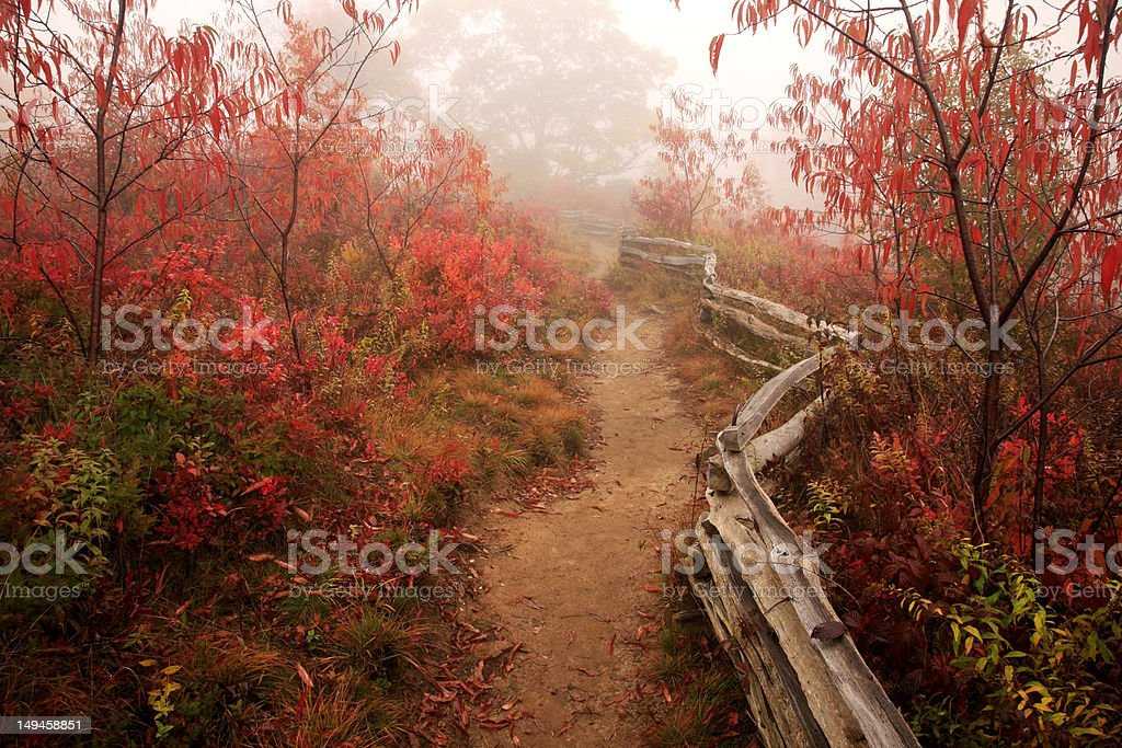 nature trail through autumn forest royalty-free stock photo