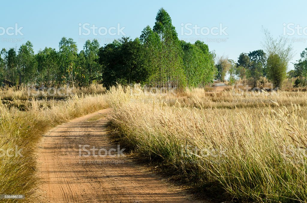 Nature trails and grass stock photo