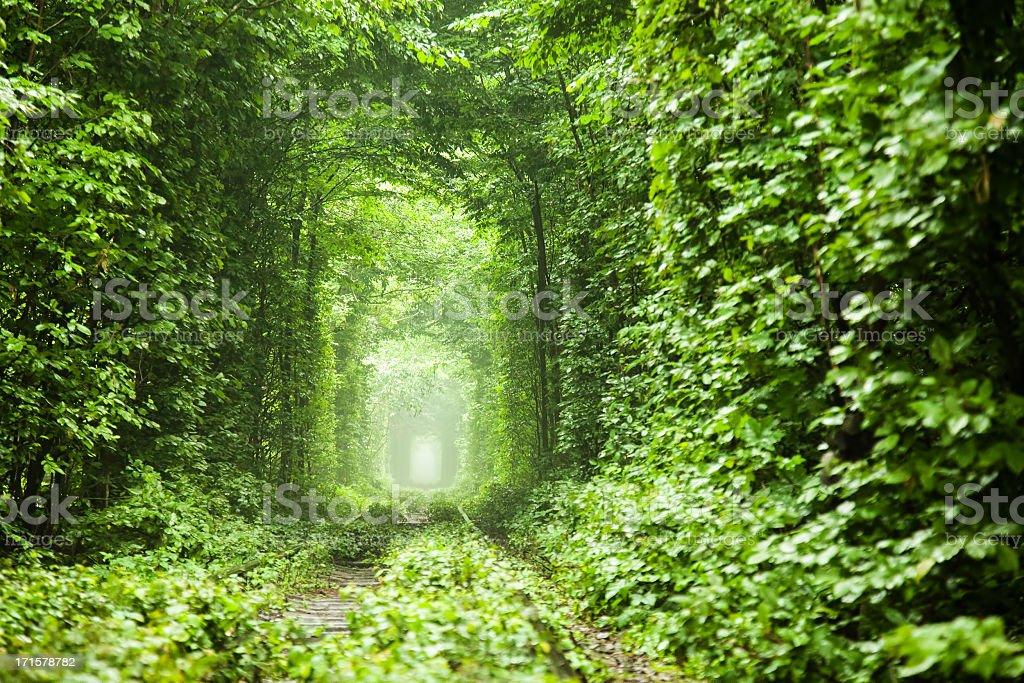 Nature tunnel stock photo