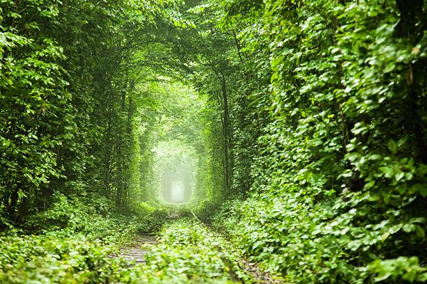 自然のトンネル - 木漏れ日 ストックフォトと画像