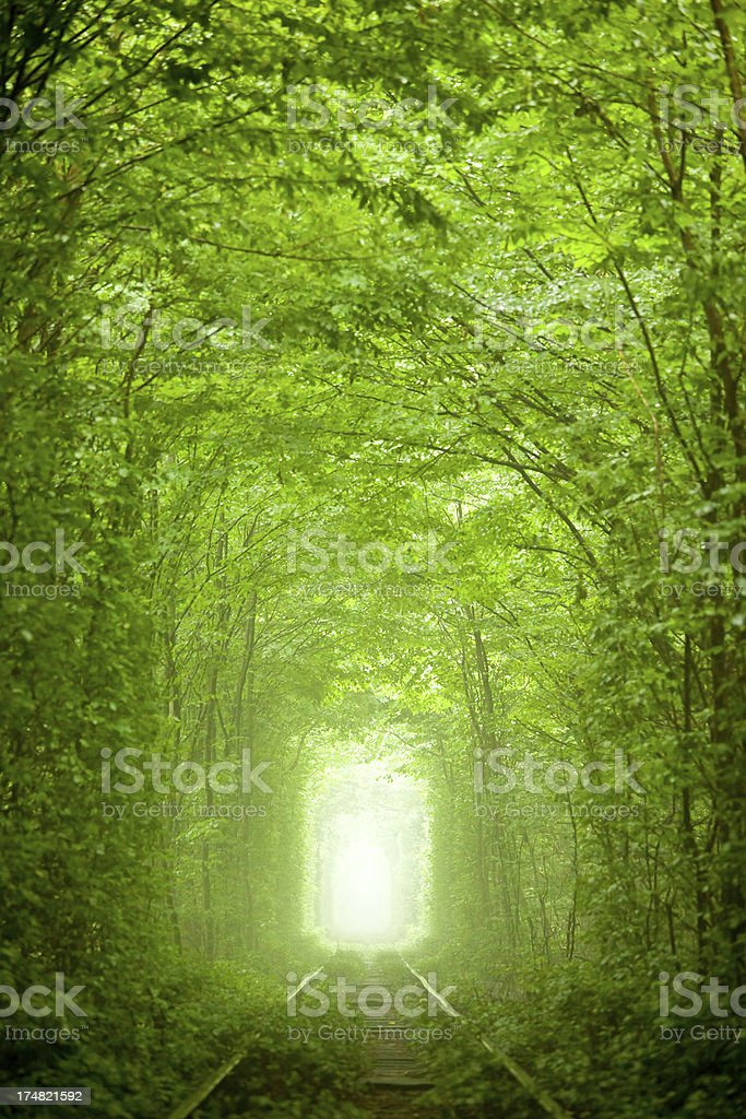 Nature tunnel royalty-free stock photo