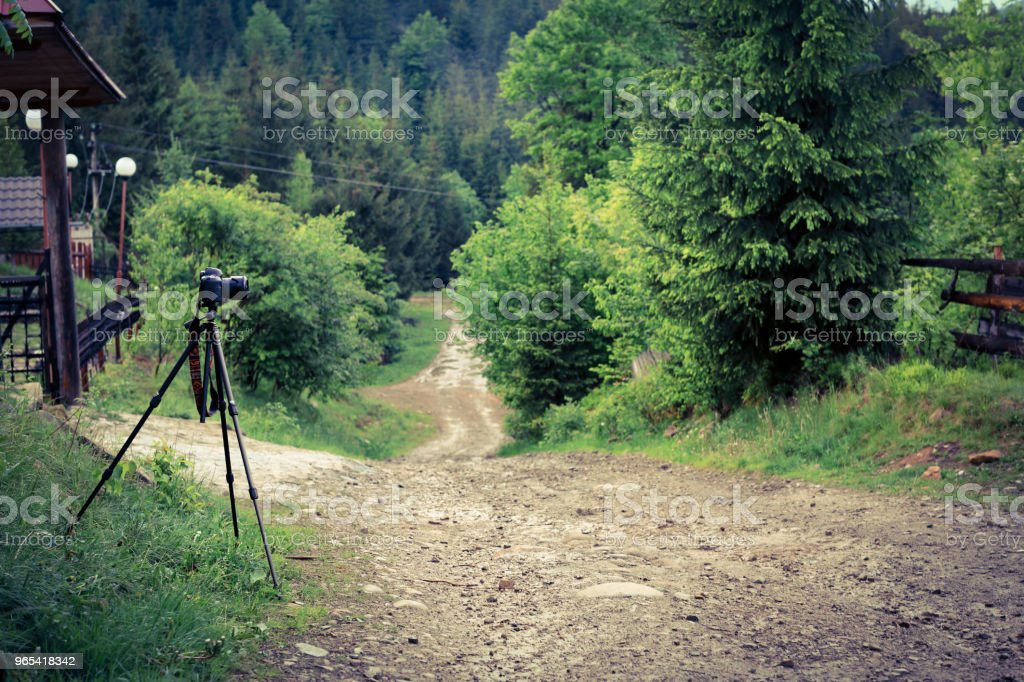 Nature view in forest in summer time royalty-free stock photo