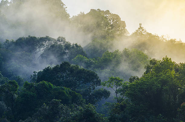 nature view of khao yai national park, thailand - 열대우림 뉴스 사진 이미지