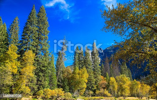 istock Nature view of pine tree and mountain forest tree in the valley of yosemite national park 1289687226