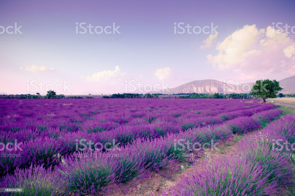 Nature view of Plateau de Valensole in landscape royalty-free stock photo
