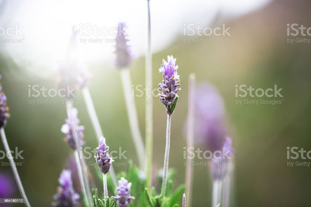 nature vintage flowers royalty-free stock photo