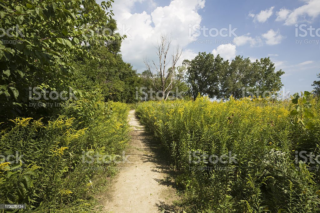 Nature Walk in Chicago royalty-free stock photo