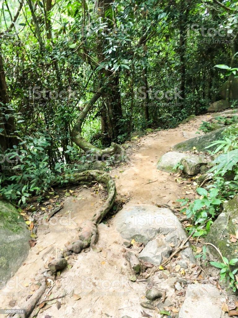 naturen gångväg i Khao Chamao - Royaltyfri Asien Bildbanksbilder