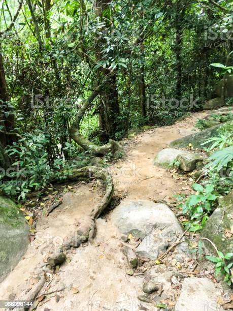 Naturen Gångväg I Khao Chamao-foton och fler bilder på Asien