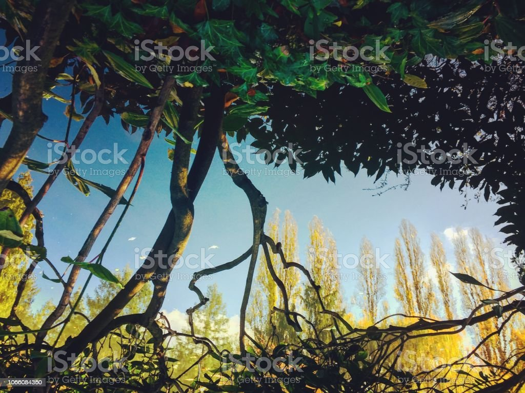 Natur Wasserreflexion der Bäume und Himmel – Foto