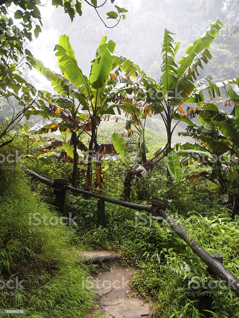 Nature way in banana forest royalty-free stock photo