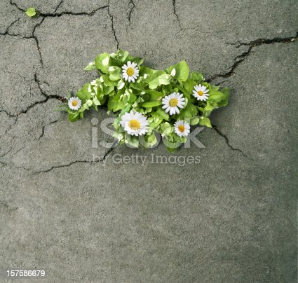 istock nature will prevail 157586679