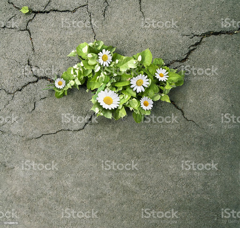 nature will prevail stock photo