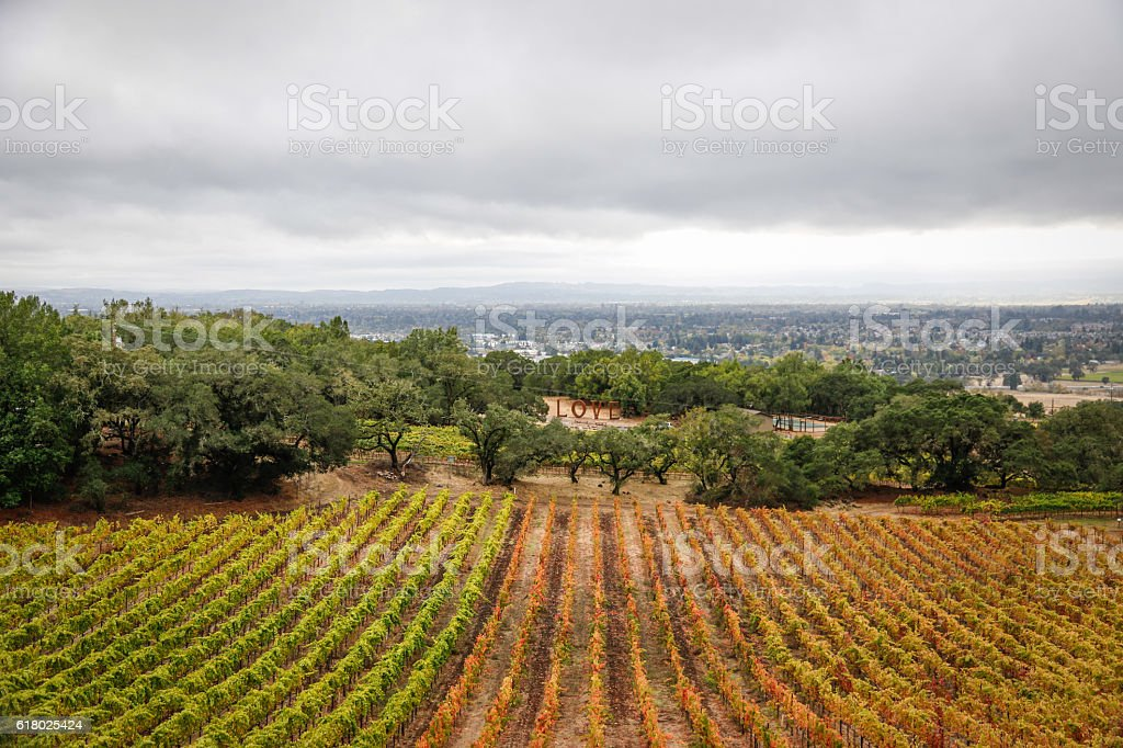 Nature: Winery view in the rain stock photo