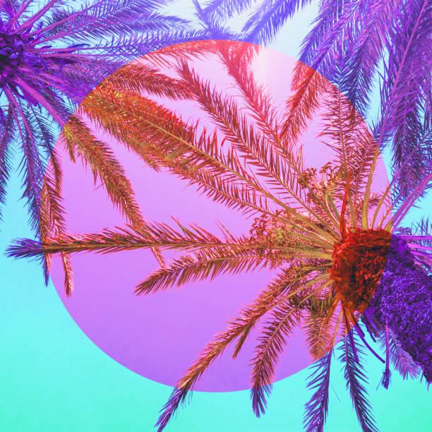 自然與棕櫚樹在倒置粉紅色和紫色的顏色和圓形框架。 - 熱帶式樣 個照片及圖片檔