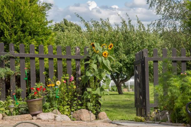 Nature_backyard2 – Foto