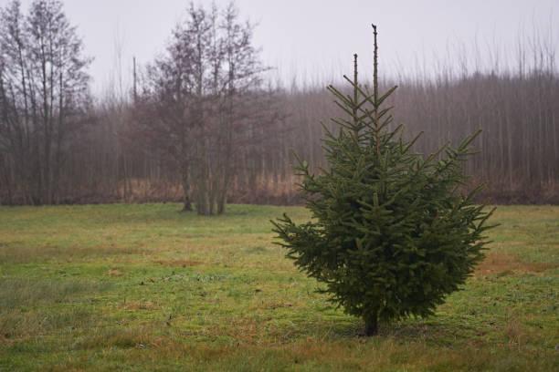 Nature_small_Christmastree – Foto