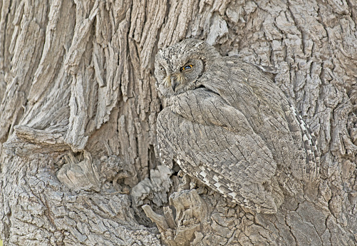 The camouflage and concealment strategies of various animal species have been widely studied, but scientists from Exeter and Cambridge universities have discovered that individual wild birds adjust their choices of where to nest based on their specific patterns and colours.