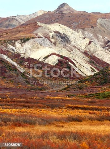 The fall foliage and mountains in Denali National Park are a kaleidoscope of colours on a beautiful autumn afternoon.