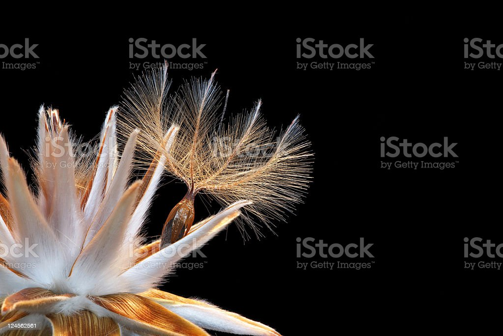 Nature's Design royalty-free stock photo