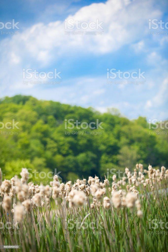 Nature's Dream royalty-free stock photo