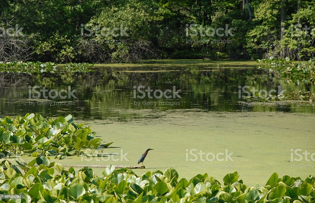 Natures Paradise royalty-free stock photo