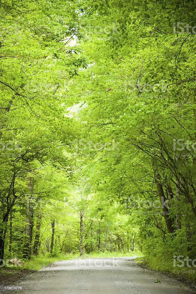 Nature's Pathway royalty-free stock photo