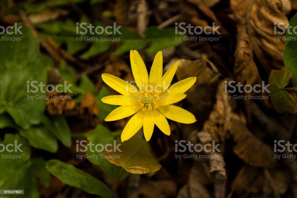 Larder secrète de la nature. Domaine la fleur est jaune. photo libre de droits
