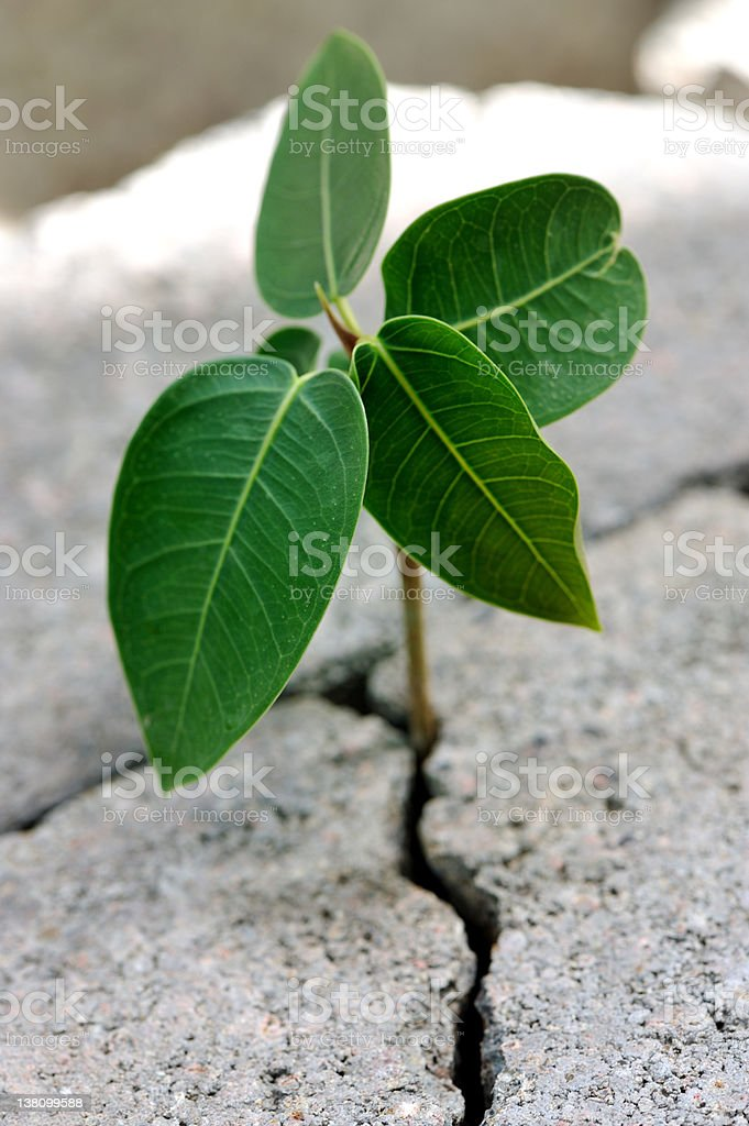 natures strength royalty-free stock photo