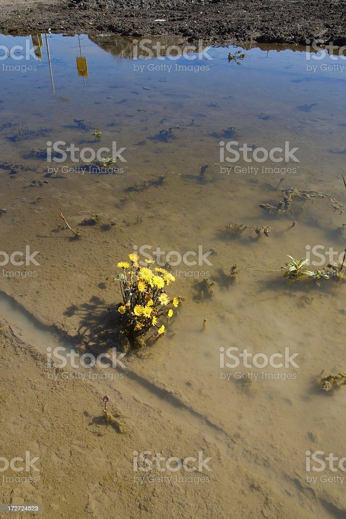 Nature's struggle of life. royalty-free stock photo
