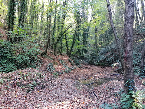 polonezköy view in autumn