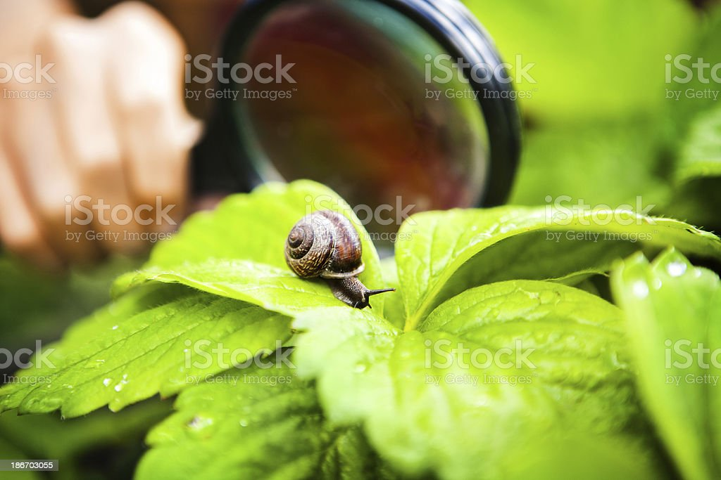 nature-study royalty-free stock photo