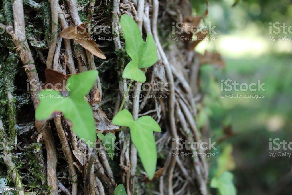 Natureza royalty-free stock photo