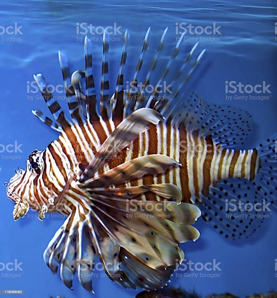 More naughty fish
