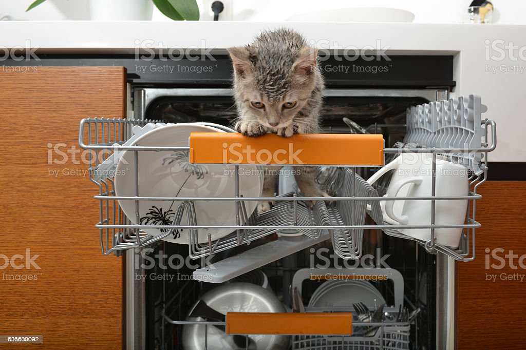 Naughty cat getting into the dishwasher stock photo