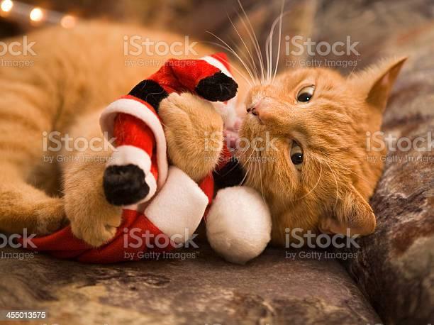 Naughty cat picture id455013575?b=1&k=6&m=455013575&s=612x612&h=7y6iiuewz2zpmhhiecmbd0 ruiblfbpdacleqnukjgg=
