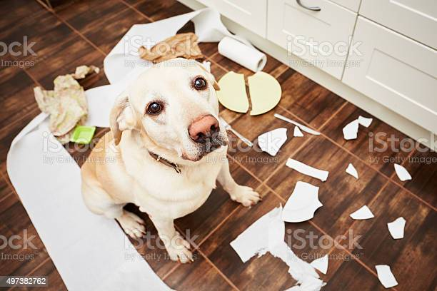 Naughty dog picture id497382762?b=1&k=6&m=497382762&s=612x612&h=hb kohccuua ogglqbtgwhqycbopxympl8jgkqtazbe=