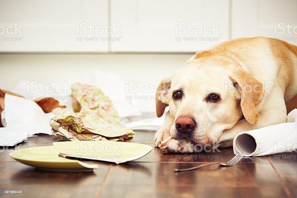 Espiègle chien - Photo de 2015 libre de droits
