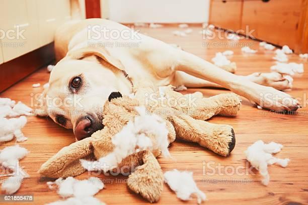 Naughty dog picture id621855478?b=1&k=6&m=621855478&s=612x612&h=pput g4byw g7mxuposahc0dq yqvh6gmmxhrfv3frs=