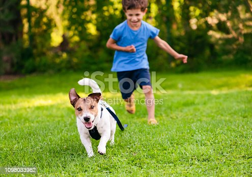 A boy chasing his Jack Russell Terrier dog