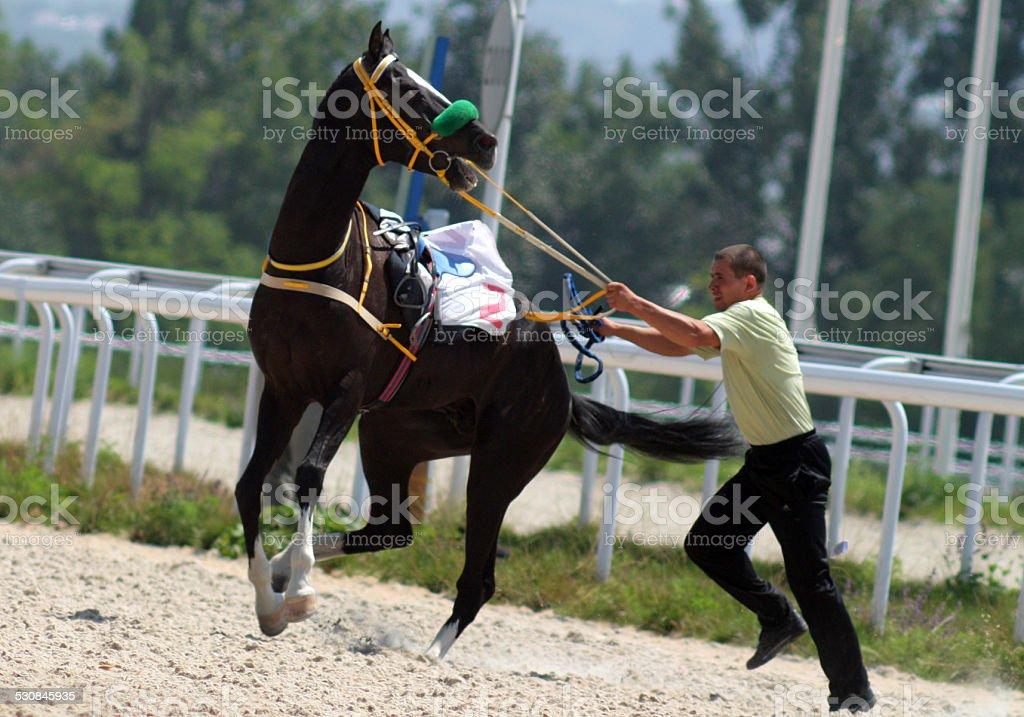 Naughty horse stock photo