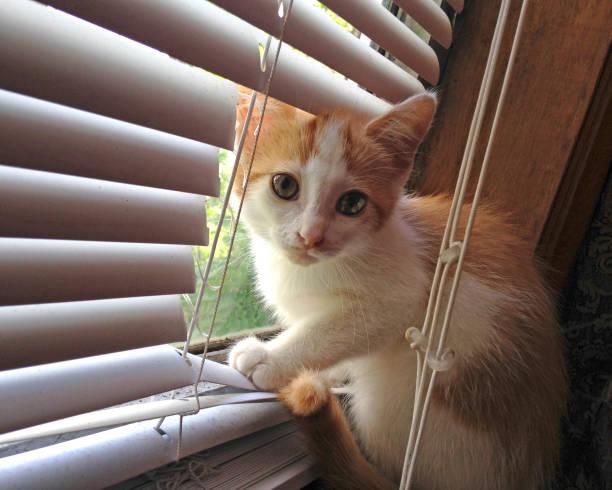 Naughty kitten picture id825031338?b=1&k=6&m=825031338&s=612x612&w=0&h=qk4k0afqzb4x8vdurdcoc710qrf ay5ls29t9f  keq=