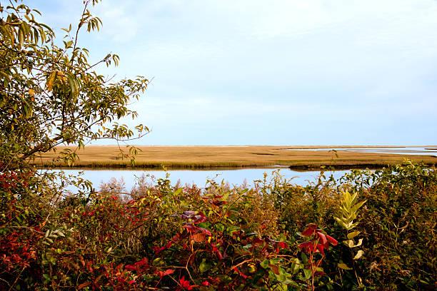 Nauset marsh stock photo