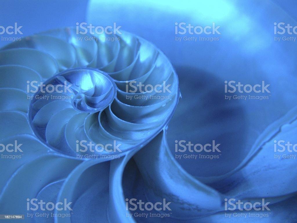 Nautilus 4 stock photo