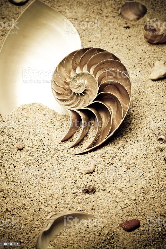 Nautilus and shells royalty-free stock photo