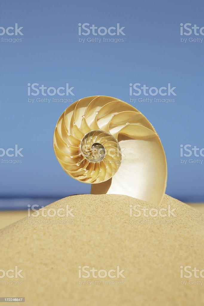 Nautilus Clarity royalty-free stock photo