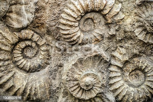 Nautilus fossil remains in stone.