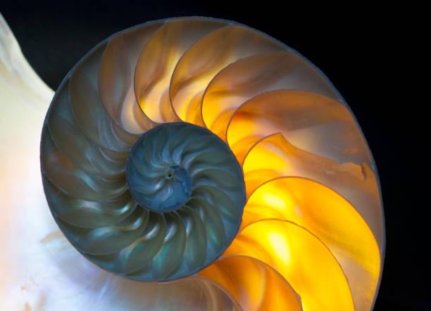 nautilus - náutilo - fotografias e filmes do acervo